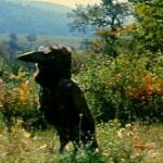 film66_3