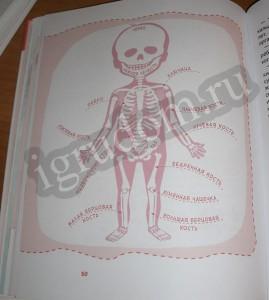 Скелет как устроен человек детские энциклопедии с Чевостиком