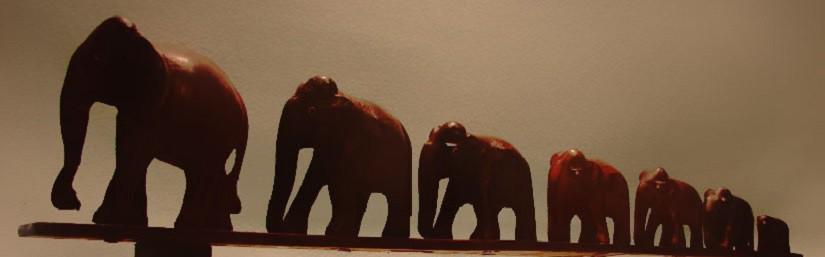 Книги о слонах.