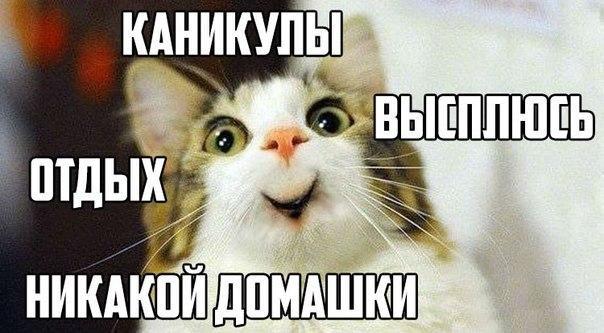 Котенок без домашки