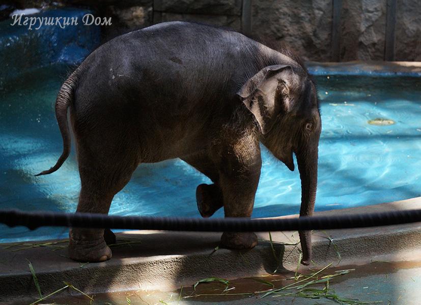 В Московском зоопарке родился слоненок