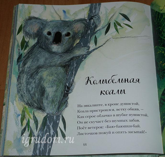 Koala(rus)